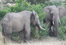 Fauna and flora at Addo Elephant Park, South Africa