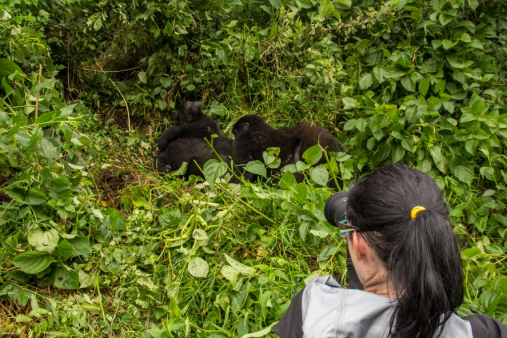 Forest treks at Bwindi National Pa