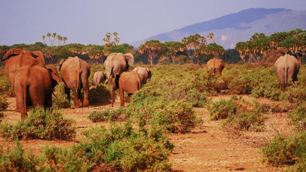 Kenya attractions - the animals
