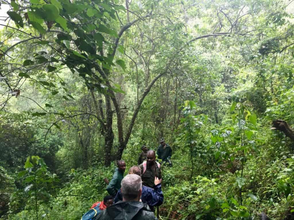 Responsible gorilla trekking in Uganda