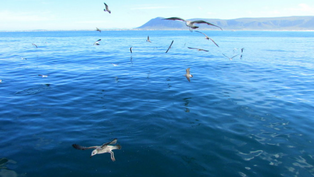 Best time to go shark cage diving in South Africa