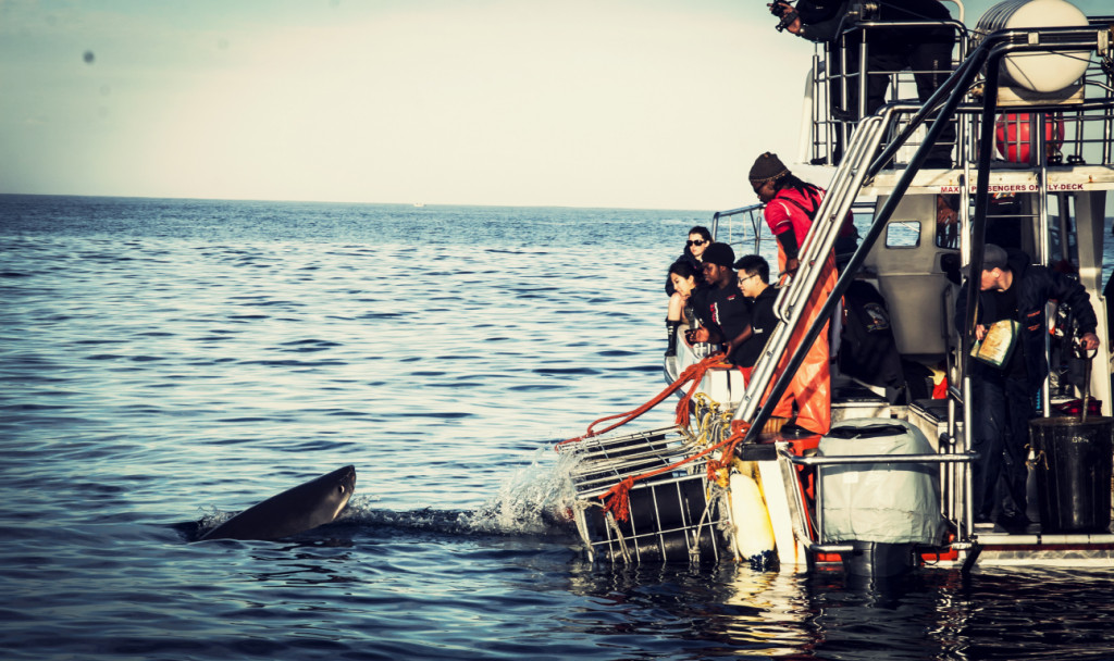 Experiences in South Africa - shark cage diving