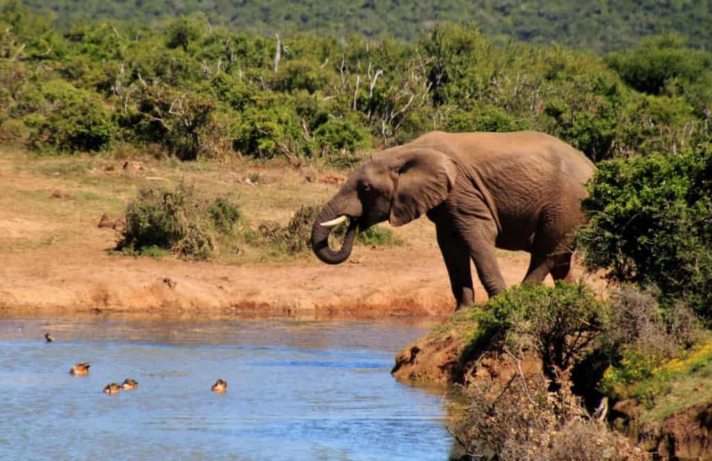 Elephants at Addo Elephant National Park, South Africa