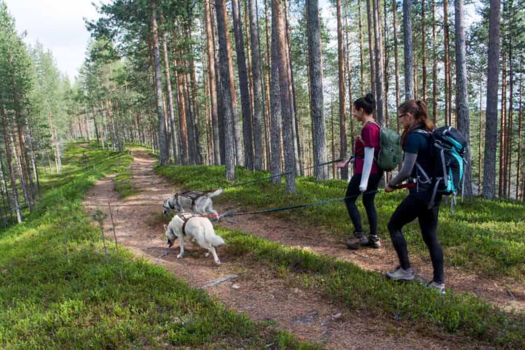 Husky Trekking through Hossa National Park with Norwide
