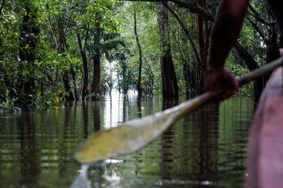 The Amazon Challenge with Large Minority