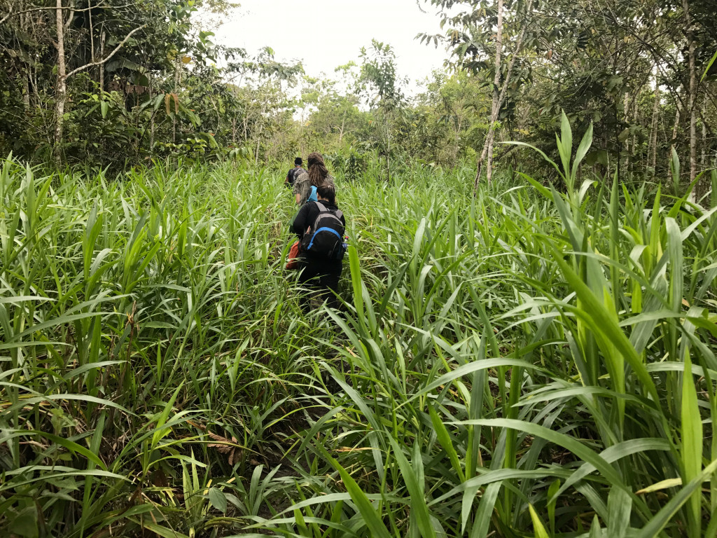 Trekking into the Amazon Jungle with Large Minority