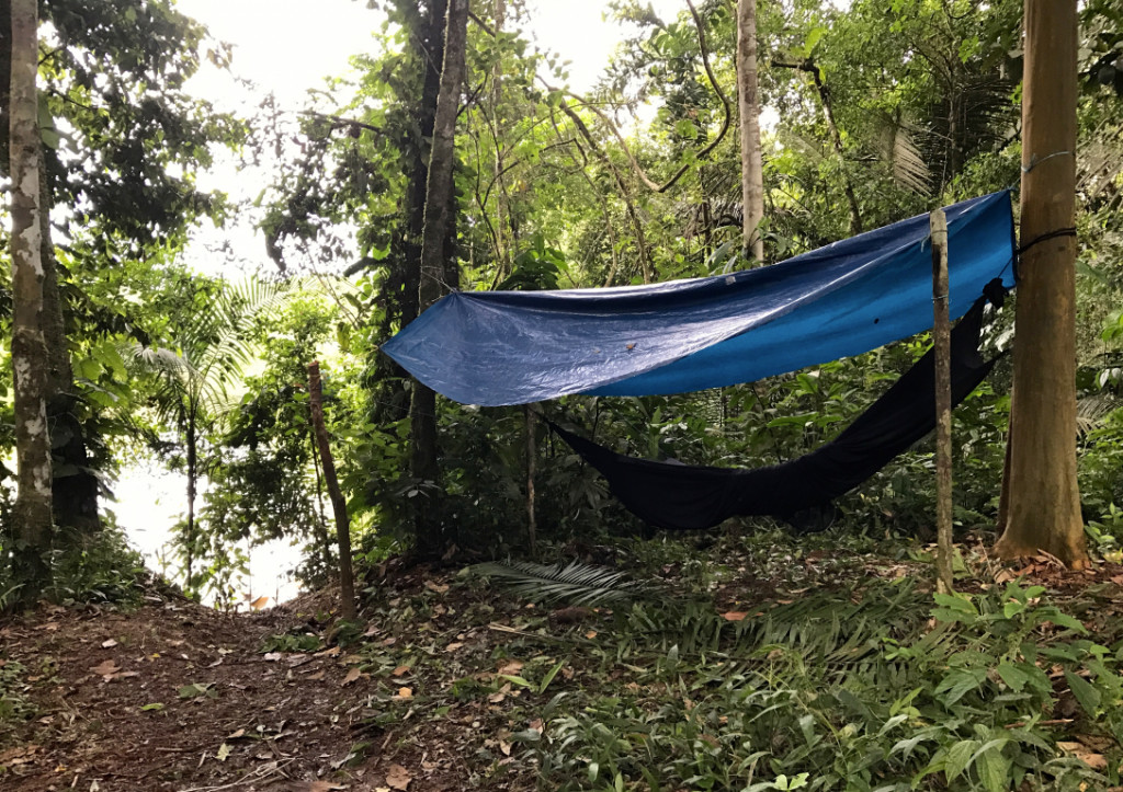 Sleeping in the Amazon Rainforest with Large Minority