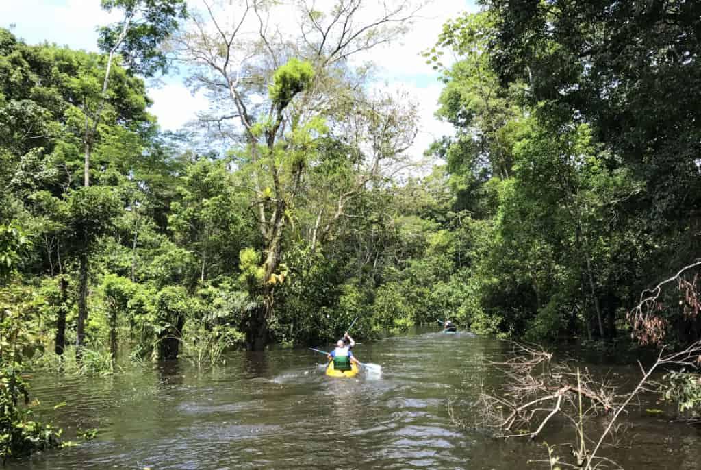 Canoeing Along the Amazon Rainforest with Large Minority