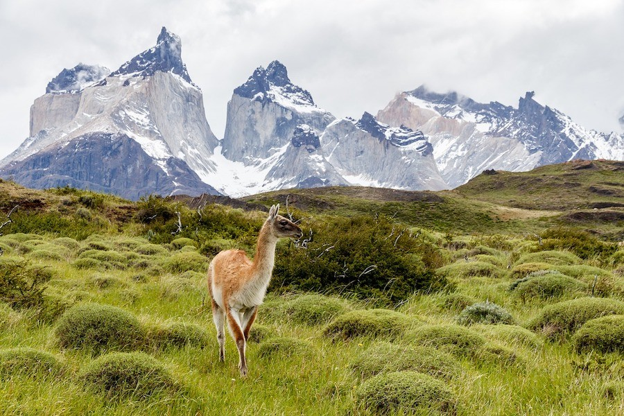 Torres Del Paine - Patagonia Travel Guide