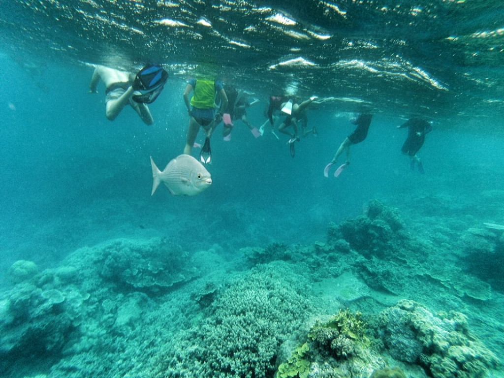 Snorkeling on the great barrier reef, Australia