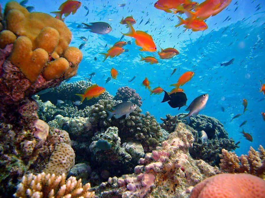 Diving in Maria la Gorda, Cuba