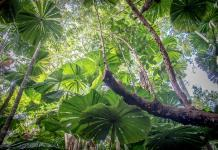Things to do in the Daintree Rainforest, Australia