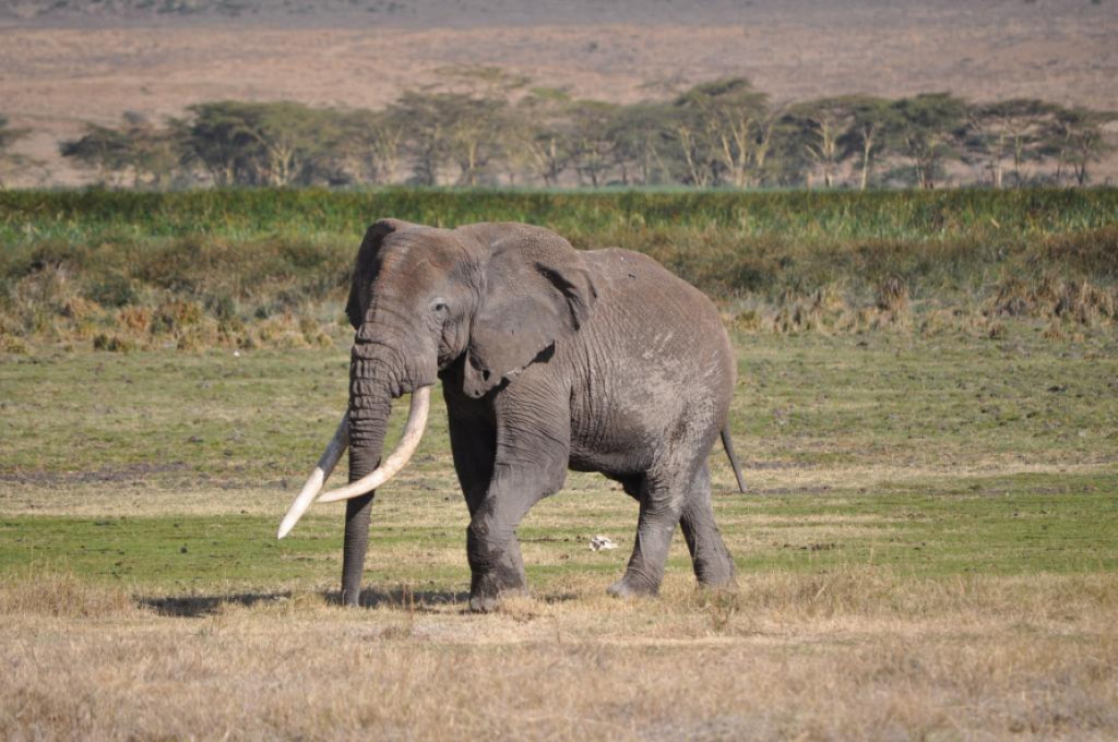 how long should I go on safari for