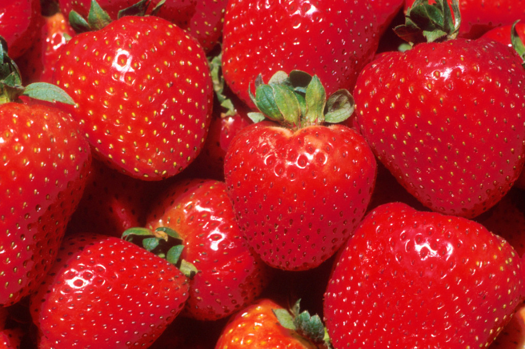Strawberry Fields in Nuwara Eliya.
