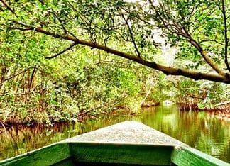 Mangroves in Trinidad and Tobago