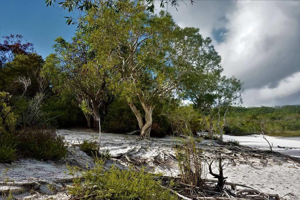 Camping On Fraser Island, Australia