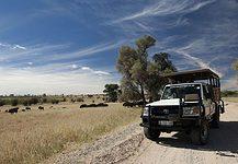 Kgalagadi Transfrontier Park safari